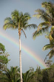 Palm trees with rainbow Royalty Free Stock Photography