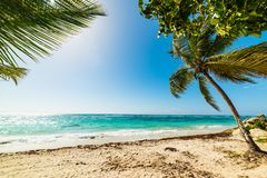 Palm trees in Raisins clairs beachin Guadeloupe island. French west indies. Lesser Antilles, Caribbean sea stock photography