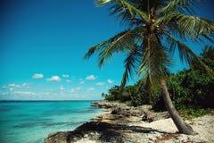 Palm trees on the Caribbean coast, turquoise sea. Palm trees, reefs and stones on the Caribbean coast, bright turquoise sea stock photos