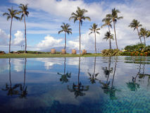 Palm trees reflected in pool at resort Stock Image