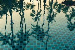 Palm trees reflected in the water of the pool. Nature. Stock Photos