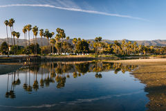Palm trees reflecting in Mission Creek, in Santa Barbara, Califo Stock Photos