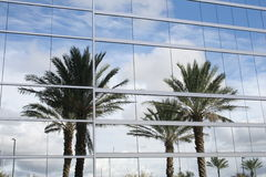 Palm trees reflection stock photography