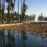 Palm trees reflection at Echo Park lake. Stock Photos