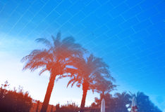 Palm trees reflection in a tropical resort pool Royalty Free Stock Image