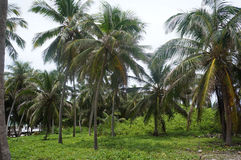 Palm trees. On a remote island stock images