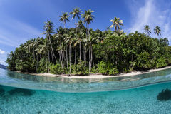 Palm Trees on Remote, Tropical Island Royalty Free Stock Photos