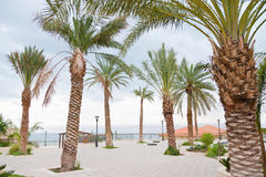 Palm trees in resort on Dead Sea Royalty Free Stock Photo