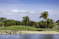 Palm trees by green lawn resort in Naples, Florida royalty free stock photography