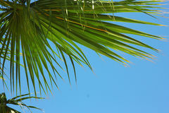 Palm trees in the resort Stock Images