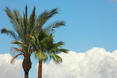 Palm trees in the resort Royalty Free Stock Photos