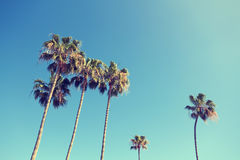Palm Trees in Retro Style Stock Photo