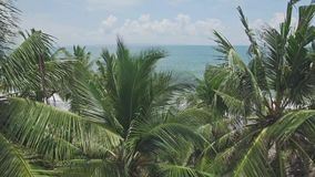 Palm Trees Rise Ocean View Aerial 4k. 4k aerial footage of palm trees and ocean in the back stock footage