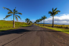 Palm trees road Royalty Free Stock Images