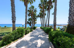 Palm trees road at the sea in protaras beach Stock Images