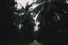 Palm Trees Road in Thailand stock photos