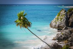 Palm trees and rocks in the Caribbean Stock Photography