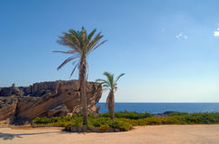 Palm trees and rocks on the coast of the Mediterranean Sea Stock Images