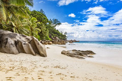 Palm trees and rocks on tropical beach Royalty Free Stock Images