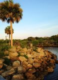 Palm Trees by the rocky shoreline Stock Photo