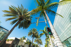 Palm trees in Rodeo drive Royalty Free Stock Photos