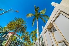 Palm trees in Rodeo Drive Royalty Free Stock Images
