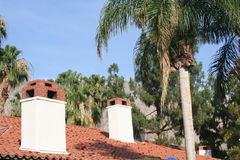 Palm Trees and Rooftops Stock Image