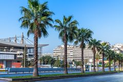 Palm trees in the row royalty free stock photography