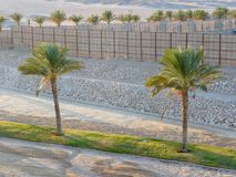 Palm trees in a row Stock Images