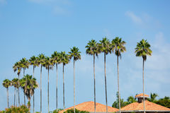 Palm Trees Row Royalty Free Stock Photos