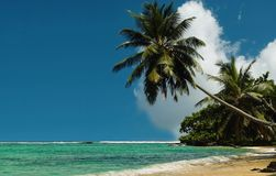 Palm trees on royal beach . Royalty Free Stock Image