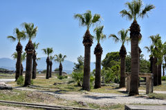 Palm trees and the ruins. Of ancient buildings royalty free stock images