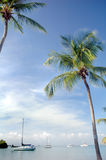 Palm Trees and Sailbots Royalty Free Stock Photos