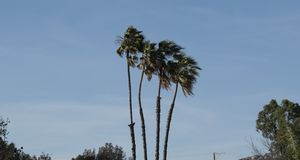 Palm trees in San Diego stock images