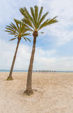 Palm trees on a sand beach Royalty Free Stock Photos