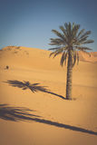 Palm trees and sand dunes in the Sahara Desert, Merzouga, Morocc Stock Photos