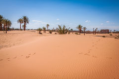 Palm trees and sand dunes in the Sahara Desert, Merzouga, Morocc Stock Photo