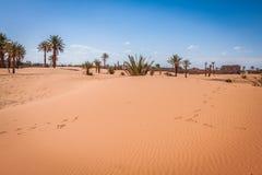 Palm trees and sand dunes in the Sahara Desert, Merzouga, Morocc Stock Photo