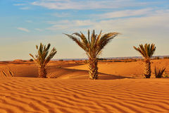 Palm trees and sand dunes Stock Image