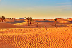 Palm trees and sand dunes in the Sahara Desert, Morocco Stock Image
