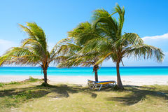 Palm trees in a sandy beach. With clear blue water Stock Photo