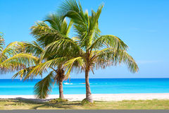 Palm trees in a sandy beach. With clear blue water Stock Photography