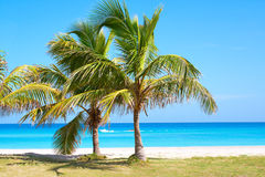 Palm trees in a sandy beach. With clear blue water Royalty Free Stock Images