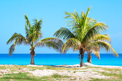 Palm trees in a sandy beach. With clear blue water Stock Images