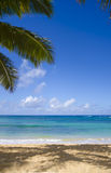 Palm trees on the sandy beach in Hawaii. Coconut Palm tree on the sandy Poipu beach in Hawaii, Cauai Royalty Free Stock Image