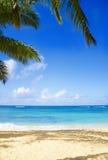 Palm trees on the sandy beach in Hawaii. Coconut Palm tree on the sandy Poipu beach in Hawaii, Kauai Stock Photos