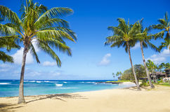 Palm trees on the sandy beach in Hawaii. Coconut Palm tree on the sandy Poipu beach in Hawaii, Kauai Stock Images