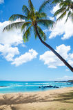 Palm trees on the sandy beach in Hawaii Royalty Free Stock Images