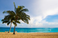 Palm trees on the sandy beach in Hawaii. Coconut Palm tree on the sandy Poipu beach in Hawaii, Kauai Stock Photography