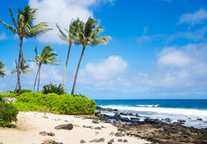 Palm trees on the sandy beach in Hawaii. Coconut Palm tree on the sandy Poipu beach in Hawaii, Kauai Stock Image